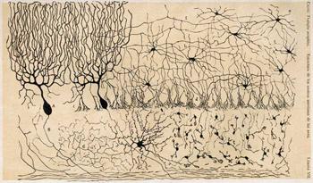 http://es.wikipedia.org/wiki/Doctrina_de_la_neurona